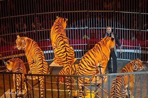 Biglietto Ingresso Circo Rinaldo Orfei Circo Animali S 236 O Animali No San Gavino Monreale Net