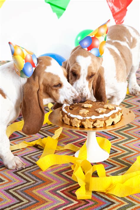 peanut butter turkey bacon cake recipe  dogs