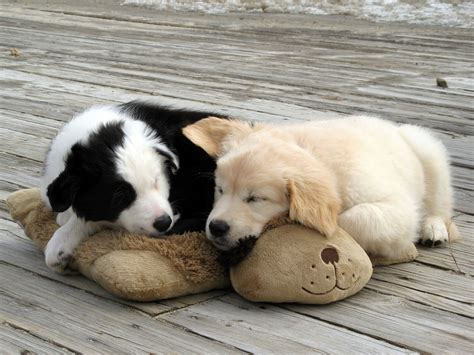 Snuggle Puppies Woofbc Flickr
