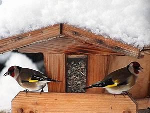 Futterhaus Für Vögel : naturtipps v gel am futterhaus ~ Articles-book.com Haus und Dekorationen