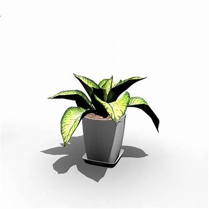 Indoor Plant Plants Roomeon 3d Decorate Interior