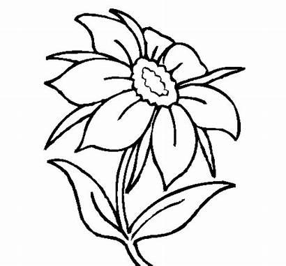 Flores Flor Pintar Silvestre Dibujos Colorear Colorir