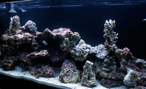 Aquascape Live Rock by Avoid These 5 Live Rock Aquascaping Pitfalls