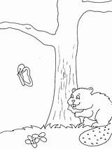 Coloring Castor Coloriage Beaver Disegni Animals Colorare Castoro Castori Animali Biber Beavers Woodland 1629 Coloriages Valentines Ausmalbilder Beaver2 Template Templates sketch template