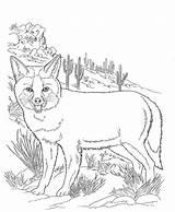 Desert Coloring Pages Animals Animal Fox Printable Bestcoloringpagesforkids Wildlife Onsugar sketch template