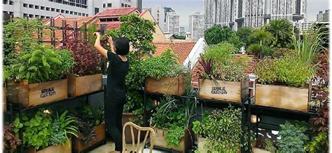 Roof Garden Decoration Ideas by Roof Garden Ideas