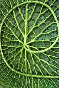 Loop | Nature pattern, Patterns and Natural