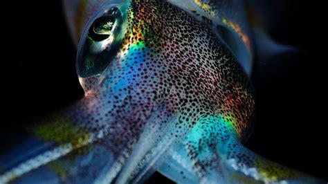 squid wallpapers wallpaper cave