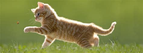 Capire il linguaggio dei gatti Cose di Casa