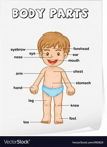 Body Parts Diagram Poster Vector Art