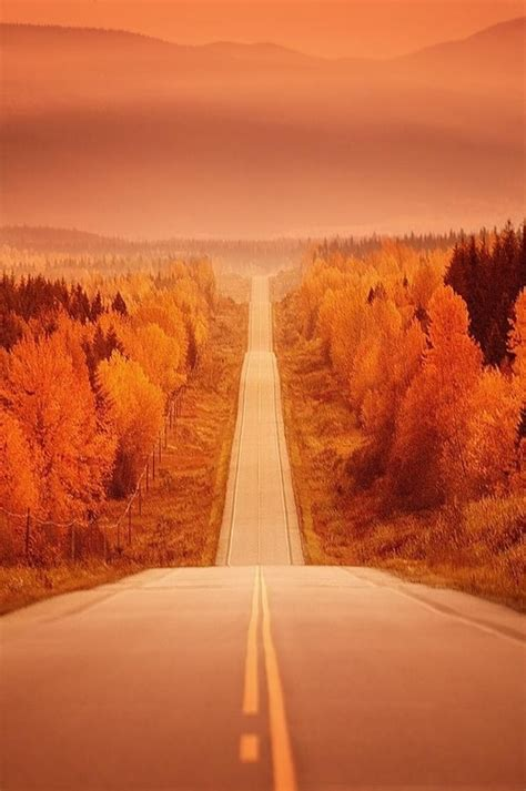 orange autumn haze pictures   images