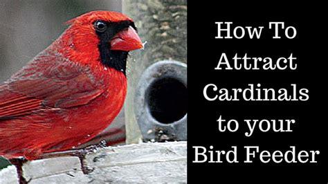 how to attract cardinals to your bird feeder best bird