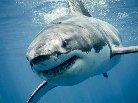 Shark Image Aahhhhh 5 Scary Shark Myths Busted