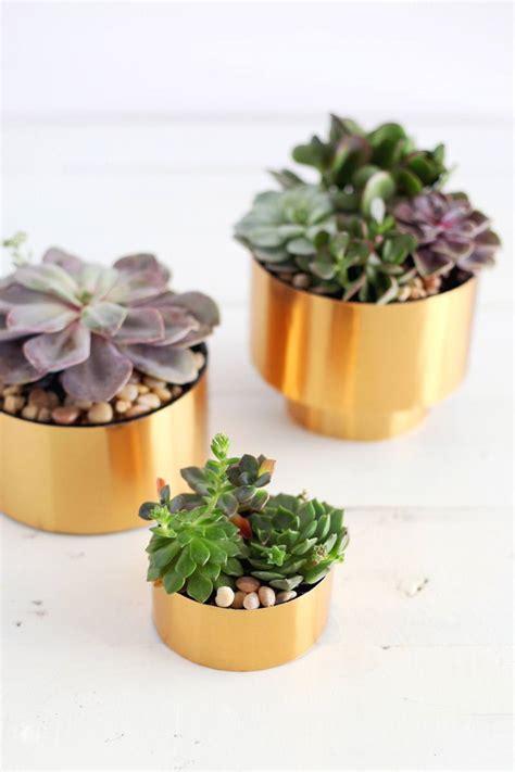 diy succulent planter ideas creative ways  display succulents homelovr