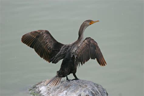 bird guide for florida beaches