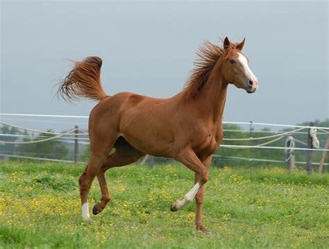 horse calm essential oil horses blends oils feb