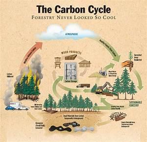 Environmental Impact Of