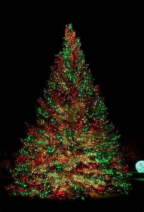 11 awesome and dazzling tree lights ideas - Tree Lights For Christmas