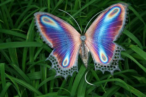 galeria de imagens de borboletas imagens de borboletas