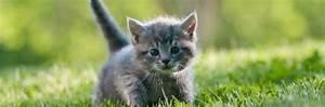 Cat Advice Kitten Advice Vets4Pets