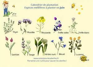 Que Planter En Juin : un blog pour les abeilles fleurs mellif res ~ Melissatoandfro.com Idées de Décoration