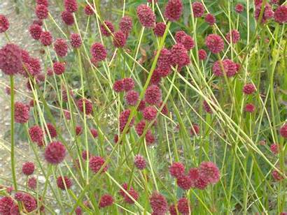 Steppe Flower Flowers Ru River Daughter Incest