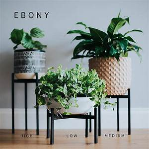Indoor, Plant, Stands, For, Any, Decor