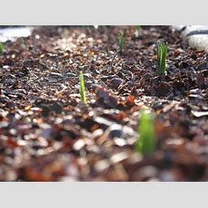 Home Life Weekly » Types Of Mulch