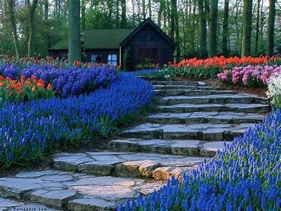 Perennials Garden Popular Path Delphinium Outdoor Flowering