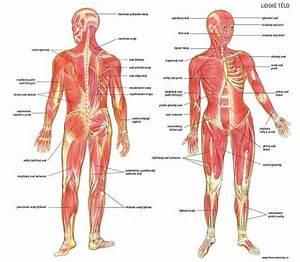 Anabolika na růst svalů - - nejlepší