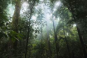 The Rainforest Sound Generator | myNoise Nature Sounds