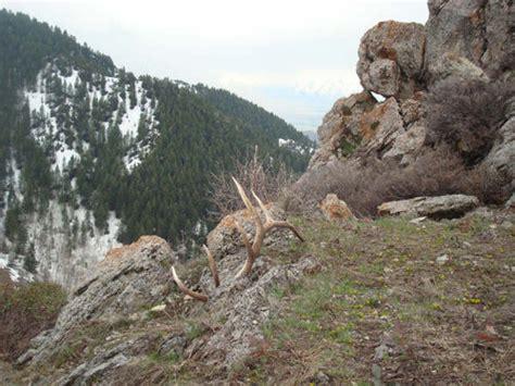 Elk Shed Utah by Northern Utah Elk Sheds Contest Winner Monstermuleys