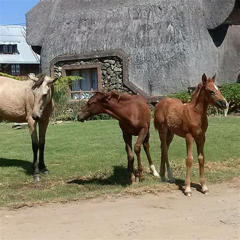 horses wild africa south