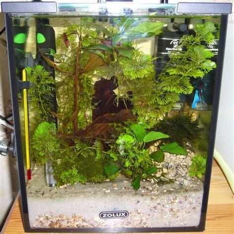 aquarium pour betta splendens aquarium betta splendens par nounou08
