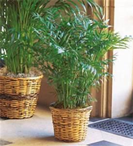 Plante Tropicale D Intérieur : plantes d 39 int rieur quelle plante d 39 int rieur choisir ~ Melissatoandfro.com Idées de Décoration