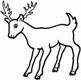 Coloring Deer Pages sketch template