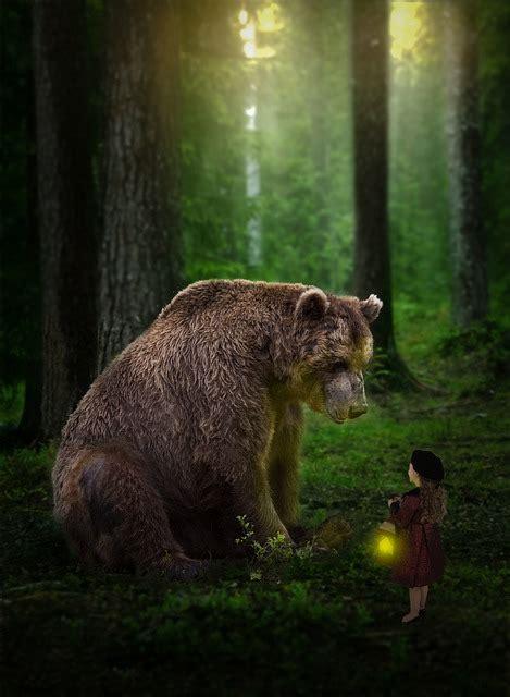 photoshop bear forrest  photo  pixabay
