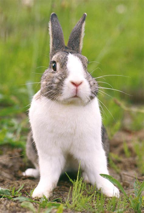 alimentazione conigli coniglio nano domestico razze comportamento e prezzo