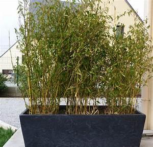 Bac Rectangulaire Pour Bambou : les bambous d 39 exterieur inspirations desjardins ~ Nature-et-papiers.com Idées de Décoration
