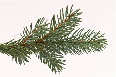 Tannenbaum Aus Zweigen by Branch Of Tree On White Stock Photo