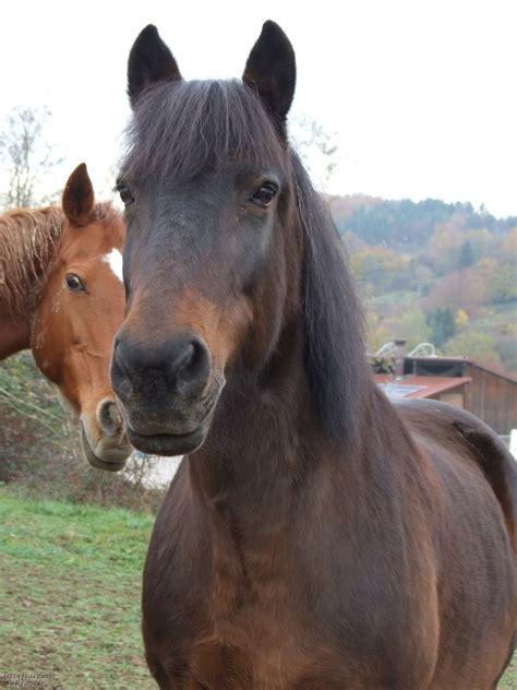welche fellfarbe bei pferden moegt ihr  liebsten