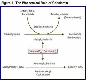 Vitamin B12 Deficiency