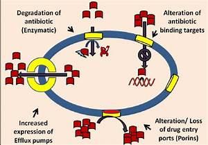 Bacterial Antibiotic Resistance Mechanisms  Red Blocks