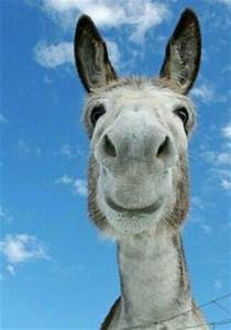 Funny-Donkey-Pictures-with-Captions-6   Funny Stuff ...