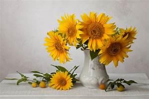 Sonnenblume Im Topf : sonnenblumen als schnittblumen auf dem zimmer pflegen ~ Orissabook.com Haus und Dekorationen