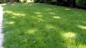 Hausmittel Gegen Ameisen Im Garten : ungeziefer im rasen ameisen im garten und rasen bek mpfen und vertreiben video rasen ~ Whattoseeinmadrid.com Haus und Dekorationen
