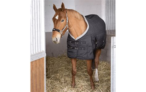 stable rugs horse horses wear rug secure horseandhound supply