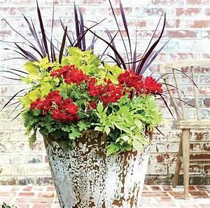 Blumenkübel Bepflanzen Vorschläge : gro e blumenk bel bepflanzen rote geranien buntnessel ziergras gartenarbeit und pflege ~ Whattoseeinmadrid.com Haus und Dekorationen