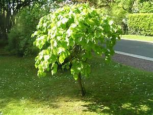 Arbre à Croissance Rapide Pour Ombre : arbre qui pousse vite identifie eucalyptus un arbre qui ~ Premium-room.com Idées de Décoration