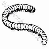 Millipede Coloring Pages Template Sketch sketch template
